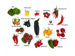 semena-redkykh-sortov-ostrogo-y-dekoratyvnogo-pertsa__40974868m.jpg
