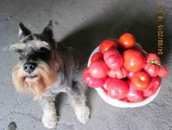 Мальчик с помидорами.JPG