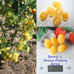 Barry' s Crazy Cherry.jpg