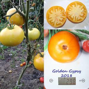 Golden Gypsy1.jpg