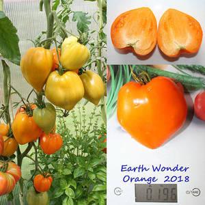 Earth Wonder Orange.jpg