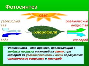 image.thumb.png.1e3bb04107f62bd2c107213289c8c976.png