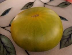 Green Gables (Gail x Everett's Rusty Oxheart)