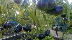 синяя груша