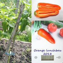 Orange lunchbox.jpg
