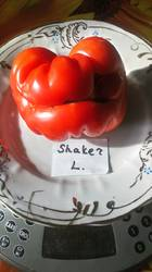 Shaker's Large Red
