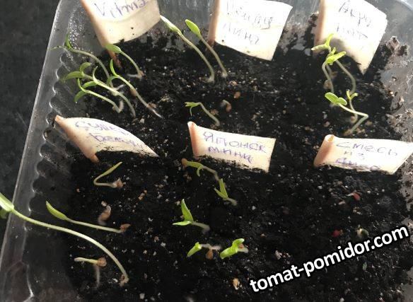 семена взошли - перед подсыпкой