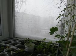 растения и зима.jpg