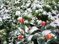2019-04-18_06-07-53_533 0 градусов,идёт снег