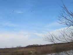 летят утки.JPG