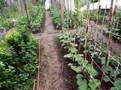 2019-06-06_19-34-28_806 огород после долгожданного дождя