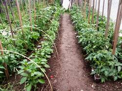 2019-06-06_19-35-51_876 Огород после долгожданного дождя