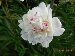 Разные цветочки