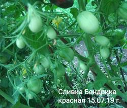 image-2019-07-23 20_09_30.jpg