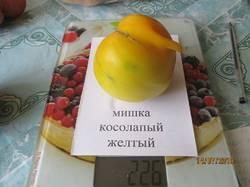 мишка косолапый желтый вес.JPG