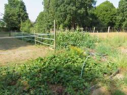 Мой огород у Александры