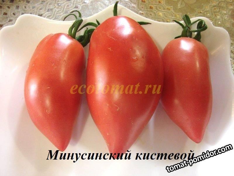 Минусинский кистевой (3).JPG