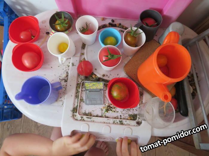 tomaty_na_kuhne_u_uyli2.JPG