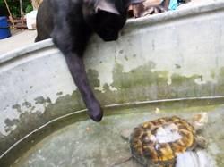 2019-08-01_22-51-51_637 Черепаха произвела фурор у питомцев