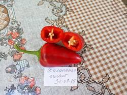 2019-08-31_22-03-17_014 Перец острый ХАЛАПЕНЬО ГИГАНТ