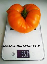 Amana Orange 23.08.19 ЗГ.jpg