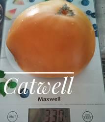 Кэтвелл 1.jpg