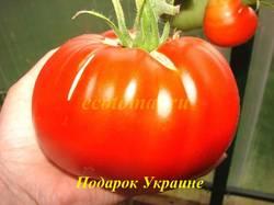 Подарок Украине.JPG