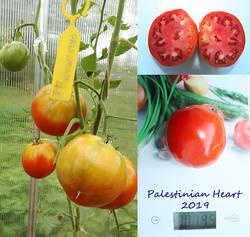 Palestinian Heart.jpg