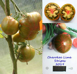 Cherokee Lime.jpg