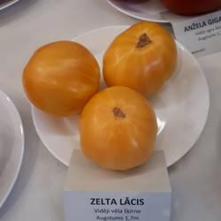 Выставка томатов в Риге 2019 год
