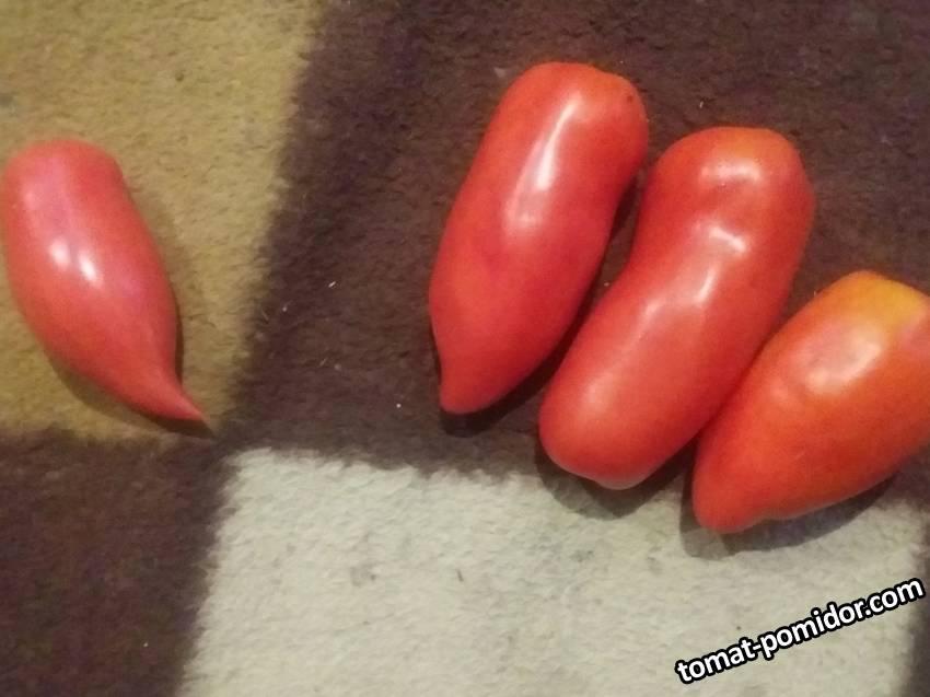 Корейский длинноплодный и 3 Корнабеля.jpg