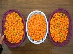 Грушевый апельсин (Pera Naranja, черри).JPG
