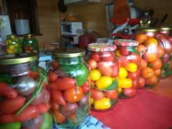 помидоры с морковной ботвой.jpg