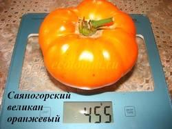 Саяногорский великан оранжевый (3).JPG