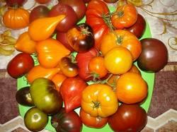 DSC00712.JPG Красотульки мои помидорчики.