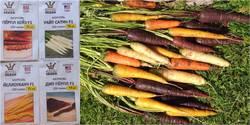 Разноцветная морковь от Престижа