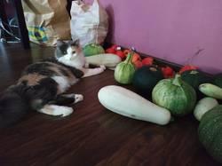 Фрейя и кабачки