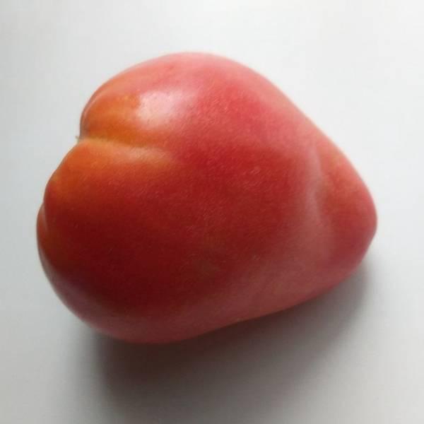 Сладкое говяжье сердце ( Coeur De Boeuf Sweet Heart, CША)