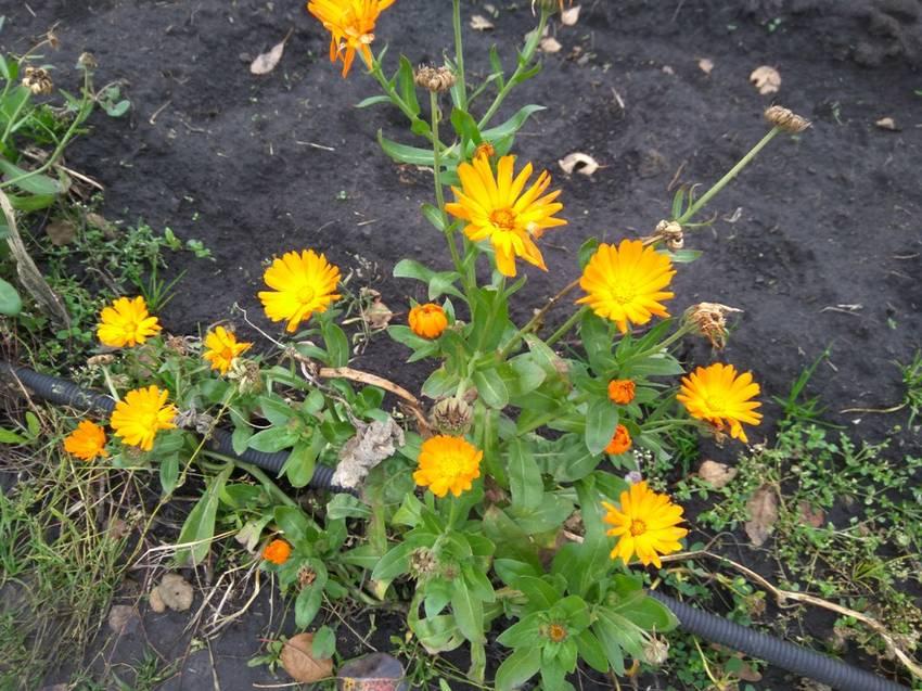 и цветочки цветут.jpg