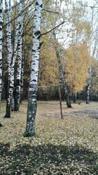 Золотая осень 4