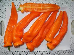 Оранжевый длинный голландец..jpg
