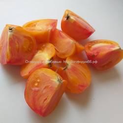 Оранжевыйорангутан(OrangeOrangutan)