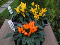 Сальса желтая и оранжевая (острые перцы).jpg