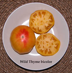39.Wild thyme bicolor.jpg