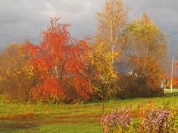 осень в деревне в солнечный день.jpg