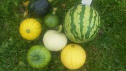 Осенний урожай.jpg