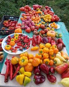 урожай за 3 августа   2_p.jpg