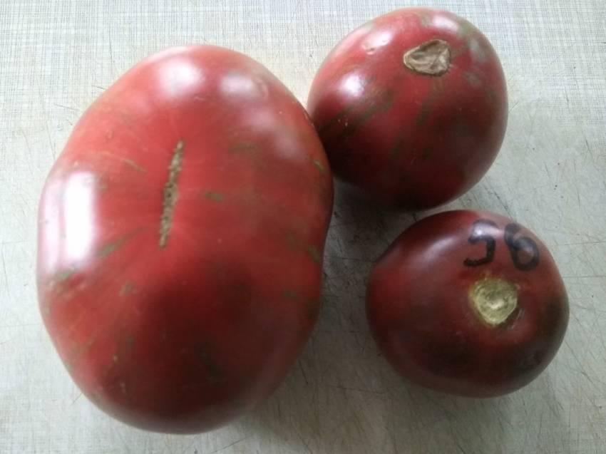 помидоры Удачи моряка.jpg