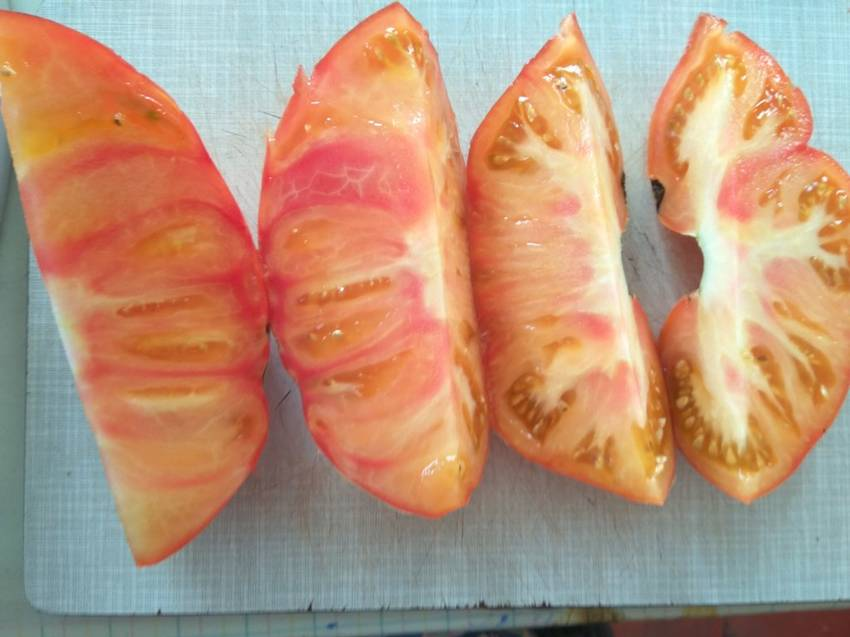 помидоры Afternoon Delight4.jpg