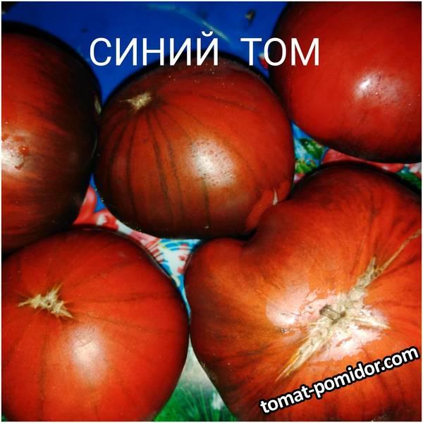Томаты ,выращенные мною в Сибири.